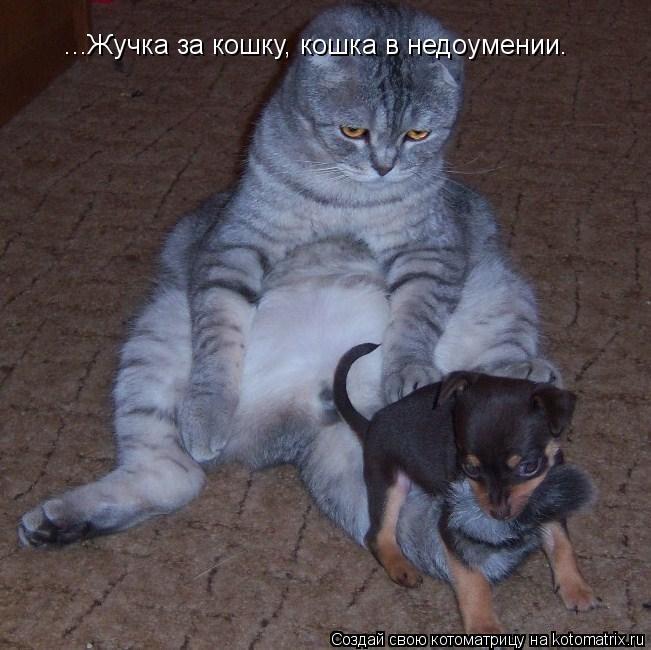 Котоматрица: ...Жучка за кошку, кошка в недоумении.