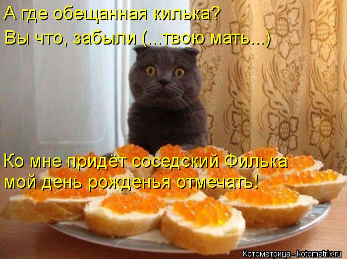 Котоматрица: А где обещанная килька? Вы что, забыли (...твою мать...) Ко мне придёт соседский Филька мой день рожденья отмечать!