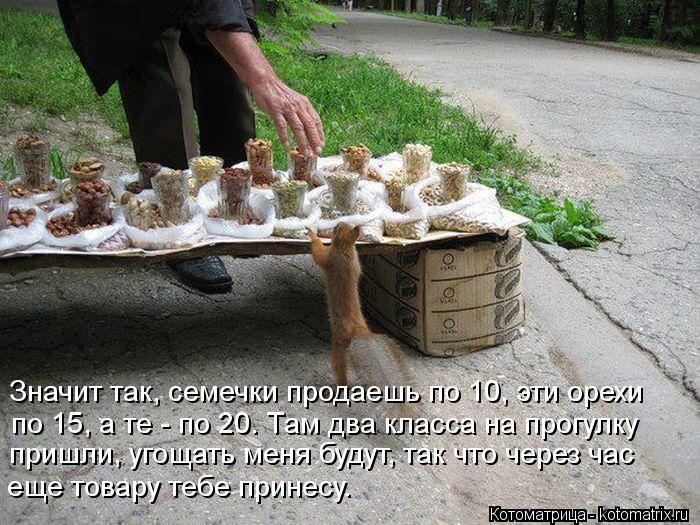 Котоматрица: Значит так, семечки продаешь по 10, эти орехи по 15, а те - по 20. Там два класса на прогулку  пришли, угощать меня будут, так что через час еще това