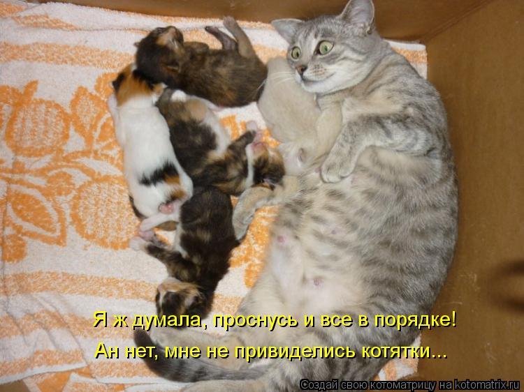 Котоматрица: Я ж думала, проснусь и все в порядке!  Ан нет, мне не привиделись котятки...