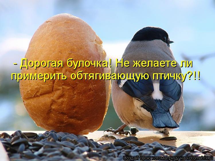 Котоматрица: - Дорогая булочка! Не желаете ли примерить обтягивающую птичку?!!