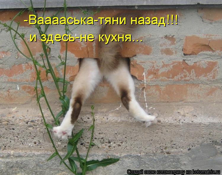 Котоматрица: -Вааааська-тяни назад!!! и здесь-не кухня...