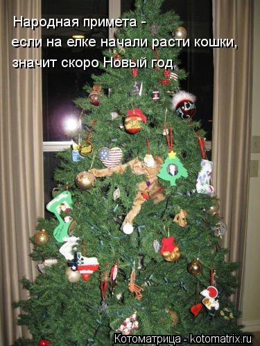 Котоматрица: если на елке начали расти кошки, значит скоро Новый год Народная примета -