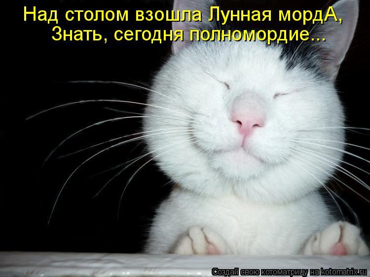 Котоматрица: Над столом взошла Лунная мордА, Знать, сегодня полномордие...