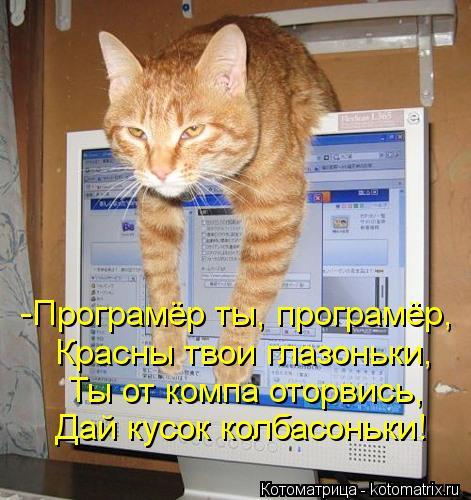 Котоматрица: -Програмёр ты, програмёр, Красны твои глазоньки, Ты от компа оторвись, Дай кусок колбасоньки!