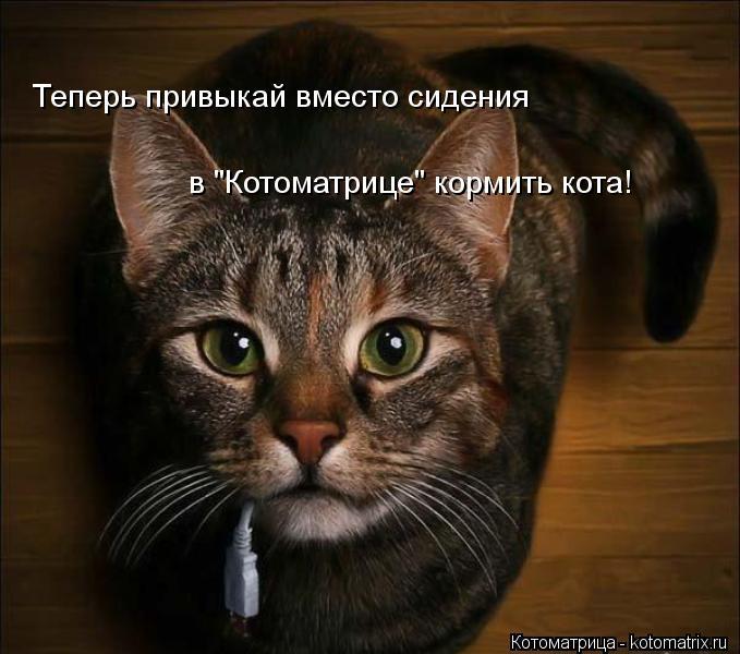 """Котоматрица: Теперь привыкай вместо сидения в """"Котоматрице"""" кормить кота!"""