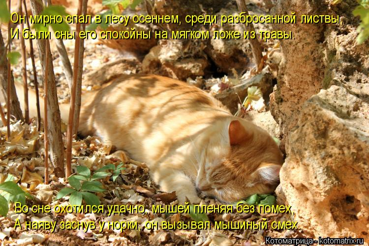 Котоматрица: Он мирно спал в лесу осеннем, среди разбросанной листвы, И были сны его спокойны на мягком ложе из травы. Во сне охотился удачно, мышей пленя