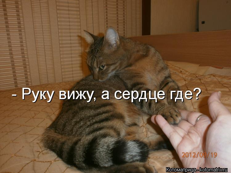 Котоматрица: - Руку вижу, а сердце где?