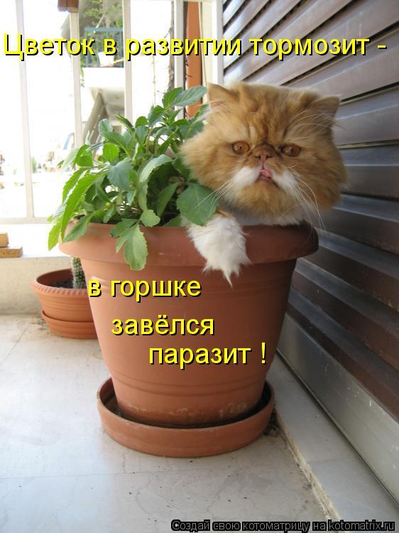 Котоматрица: паразит ! Цветок в развитии тормозит - в горшке завёлся