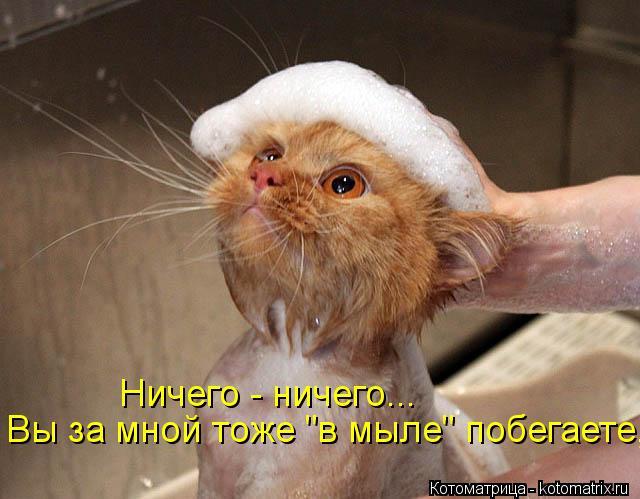 """Котоматрица: Ничего - ничего... Вы за мной тоже """"в мыле"""" побегаете,"""