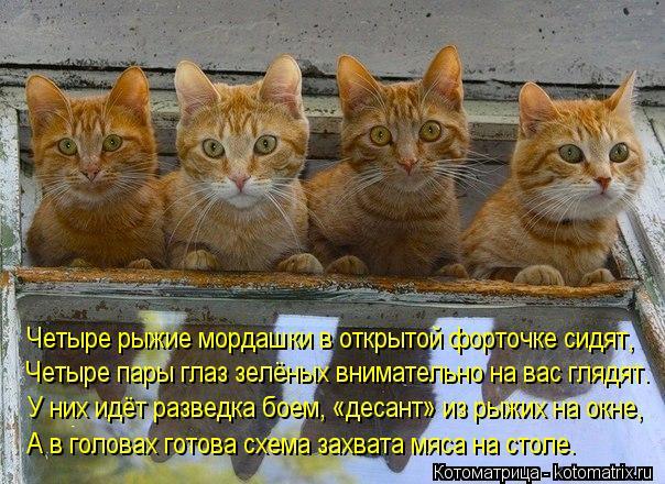 Котоматрица: Четыре рыжие мордашки в открытой форточке сидят,  Четыре пары глаз зелёных внимательно на вас глядят. У них идёт разведка боем, «десант» из