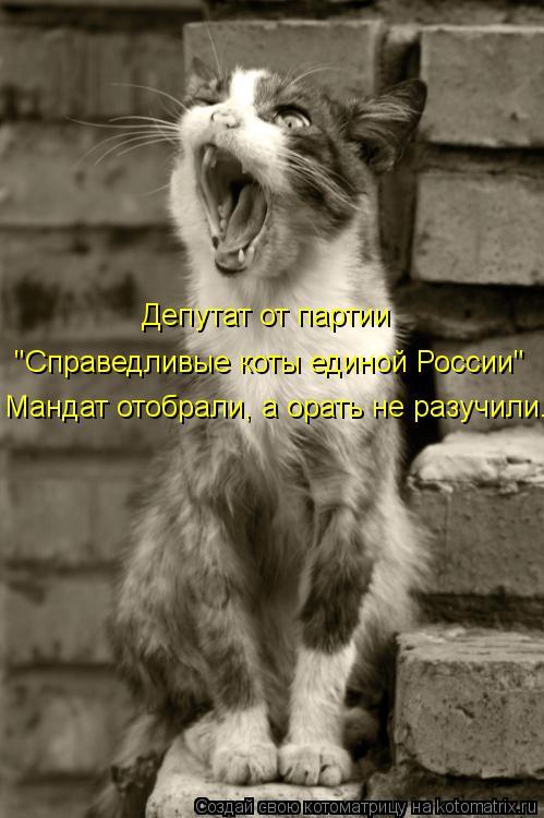 """Котоматрица: """"Справедливые коты единой России"""" Мандат отобрали, а орать не разучили. Депутат от партии"""