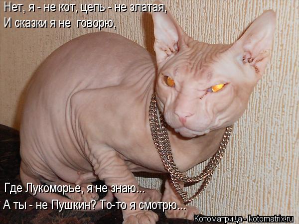 Котоматрица: Нет, я - не кот, цепь - не златая, И сказки я не  говорю, Где Лукоморье, я не знаю... А ты - не Пушкин? То-то я смотрю...