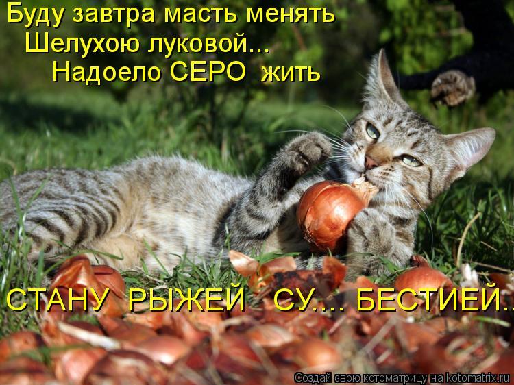 Котоматрица: Буду завтра масть менять  Шелухою луковой... Надоело СЕРО  жить СТАНУ  РЫЖЕЙ   СУ.... БЕСТИЕЙ..