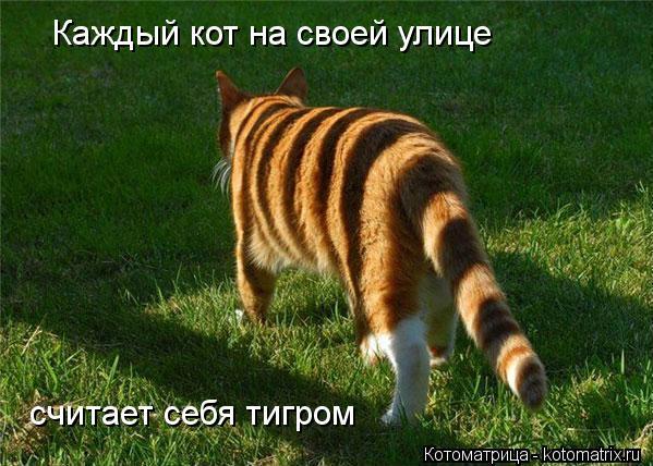Котоматрица: Каждый кот на своей улице считает себя тигром