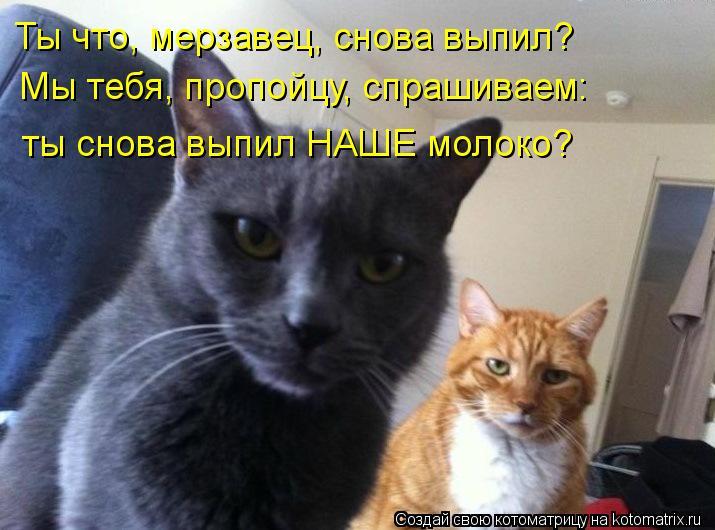 http://kotomatrix.ru/images/lolz/2012/09/29/kotomatritsa_lz.jpg
