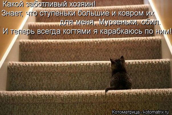 Котоматрица: Какой заботливый хозяин!  Знает, что ступеньки большие и ковром их для меня, Мурзеньки, обил. И теперь всегда когтями я карабкаюсь по ним!