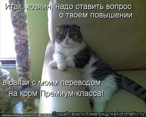 Котоматрица: Итак, хозяин, надо ставить вопрос  о твоем повышении в связи с моим переводом на корм Премиум-класса!