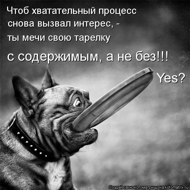 Котоматрица: Чтоб хватательный процесс снова вызвал интерес, - ты мечи свою тарелку с содержимым, а не без!!! Yes?