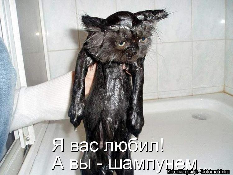 Котоматрица: Я вас любил!  А вы - шампунем...