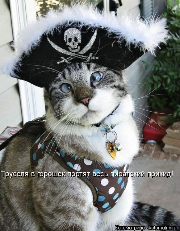 Котоматрица: Труселя в горошек портят весь пиратский прикид!