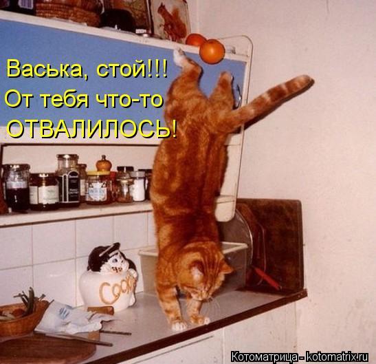 Котоматрица: Васька, стой!!! ОТВАЛИЛОСЬ! От тебя что-то