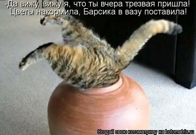 Котоматрица: -Да вижу, вижу я, что ты вчера трезвая пришла! Цветы накормила, Барсика в вазу поставила!