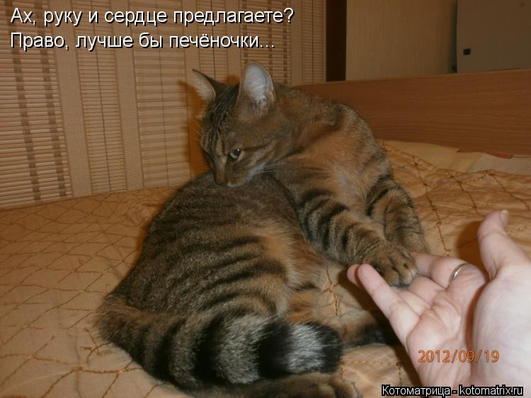 Котоматрица: Ах, руку и сердце предлагаете? Право, лучше бы печёночки...