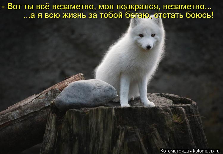Котоматрица: - Вот ты всё незаметно, мол подкрался, незаметно... ...а я всю жизнь за тобой бегаю, отстать боюсь!