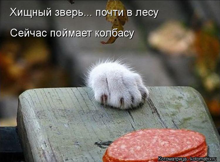 Котоматрица: Сейчас поймает колбасу Хищный зверь... почти в лесу
