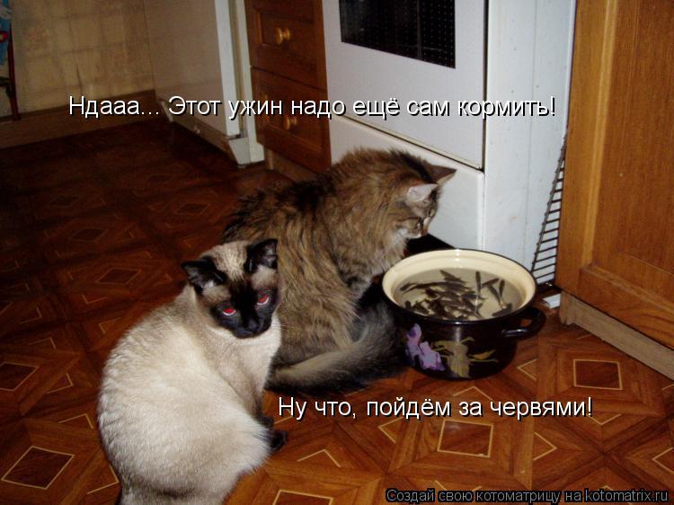 Котоматрица: Ндааа... Этот ужин надо ещё сам кормить! Ну что, пойдём за червями!