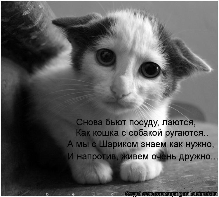 Котоматрица: Снова бьют посуду, лаются, Как кошка с собакой ругаются.. А мы с Шариком знаем как нужно, И напротив, живем очень дружно...