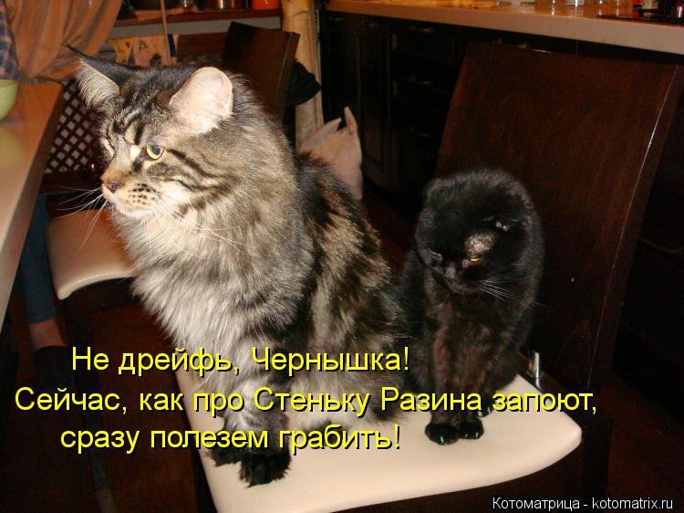 Котоматрица: Не дрейфь, Чернышка! Сейчас, как про Стеньку Разина запоют, сразу полезем грабить!