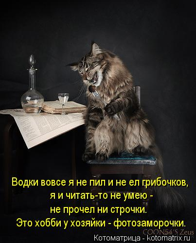 Котоматрица: я и читать-то не умею -  не прочел ни строчки. Водки вовсе я не пил и не ел грибочков, Это хобби у хозяйки - фотозаморочки.