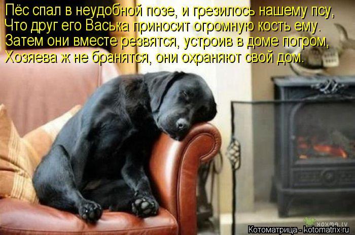 Котоматрица: Пёс спал в неудобной позе, и грезилось нашему псу, Что друг его Васька приносит огромную кость ему. Затем они вместе резвятся, устроив в доме