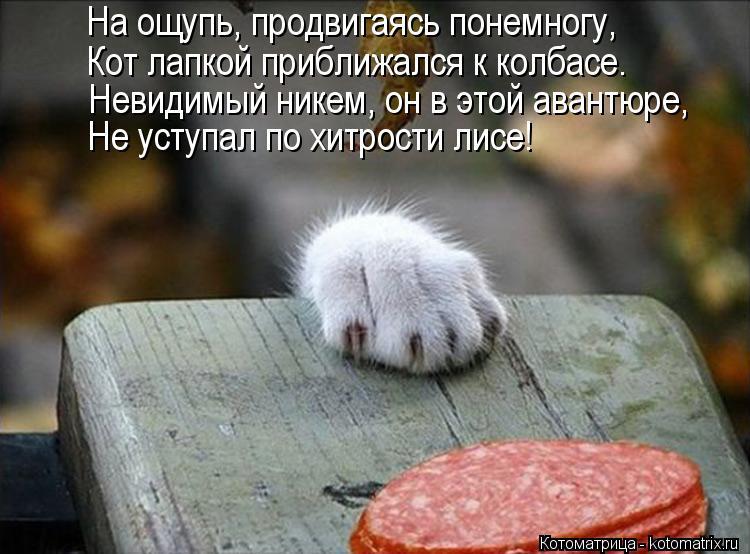 Котоматрица: На ощупь, продвигаясь понемногу, Кот лапкой приближался к колбасе. Невидимый никем, он в этой авантюре, Не уступал по хитрости лисе!