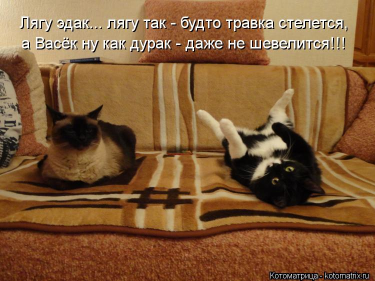 http://kotomatrix.ru/images/lolz/2012/10/01/kotomatritsa_Wp.jpg