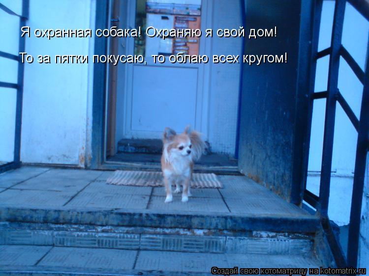 Котоматрица: Я охранная собака! Охраняю я свой дом! То за пятки покусаю, то облаю всех кругом!