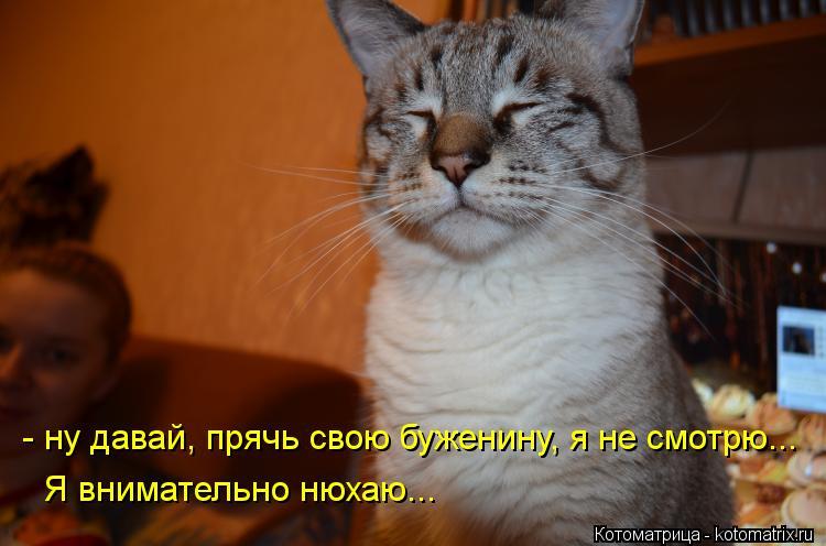 Котоматрица: - ну давай, прячь свою буженину, я не смотрю... Я внимательно нюхаю...