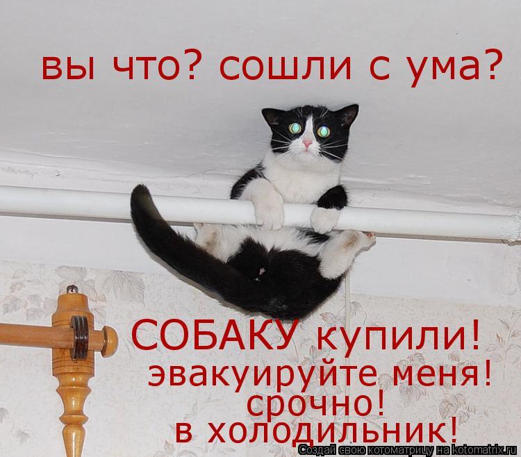 Котоматрица: вы что? сошли с ума?  СОБАКУ купили!  эвакуируйте меня!  срочно!  в холодильник!