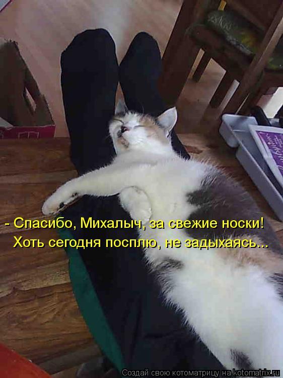 Котоматрица: - Спасибо, Михалыч, за свежие носки! Хоть сегодня посплю, не задыхаясь...