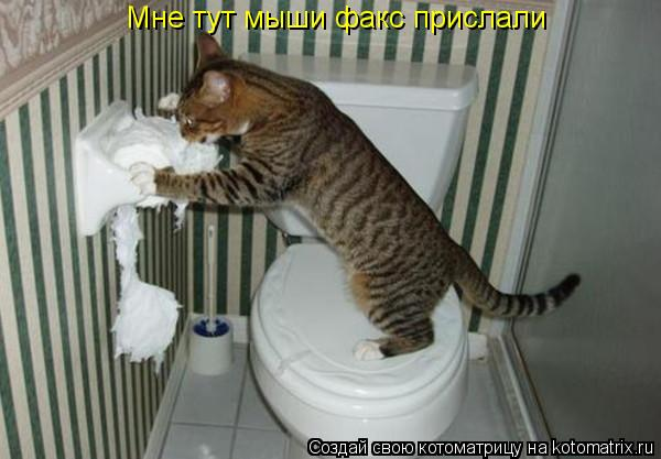 Котоматрица: Мне тут мыши факс прислали