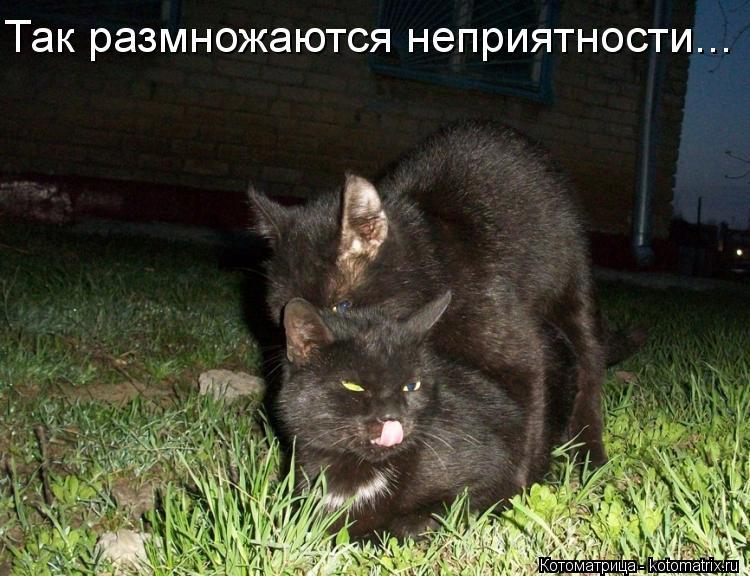 Котоматрица Kotomatritsa_pF