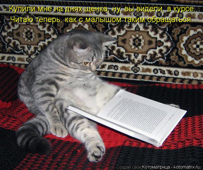 Котоматрица: - Купили мне на днях щенка, ну, вы видели, в курсе... Читаю теперь, как с малышом таким обращаться.