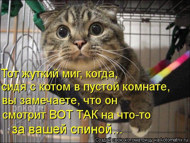 Котоматрица: Тот жуткий миг, когда, сидя с котом в пустой комнате,  вы замечаете, что он смотрит ВОТ ТАК на что-то за вашей спиной...
