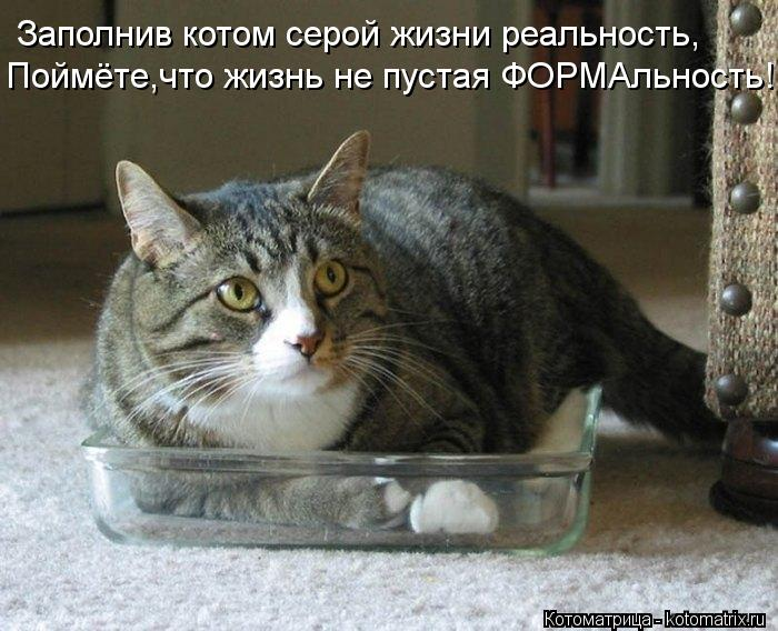 Котоматрица: Заполнив котом серой жизни реальность, Поймёте,что жизнь не пустая ФОРМАльность!..