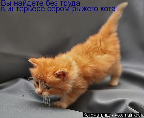 Котоматрица: Вы найдёте без труда в интерьере сером рыжего кота!