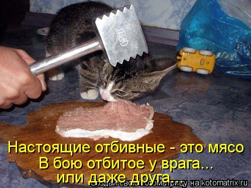 Котоматрица: Настоящие отбивные - это мясо В бою отбитое у врага... или даже друга...