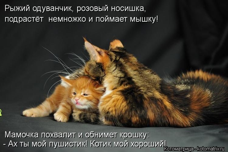 Котоматрица: Рыжий одуванчик, розовый носишка, подрастёт  немножко и поймает мышку! Мамочка похвалит и обнимет крошку: - Ах ты мой пушистик! Котик мой хор