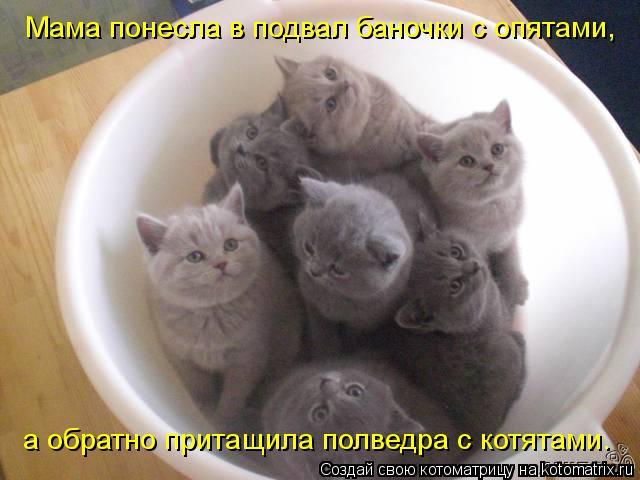 Котоматрица: Мама понесла в подвал баночки с опятами, а обратно притащила полведра с котятами.